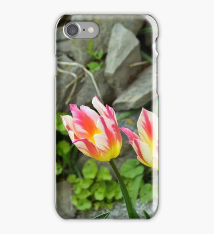 Tulpen, Gailenberg iPhone Case/Skin