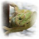 Chameleon: Fifty Shades of Green by taiche