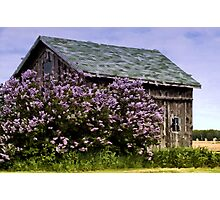 Lilac Shed Photographic Print