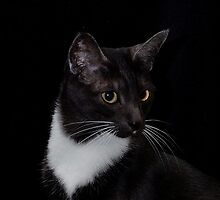 Smokey's whiskers by Marjorie Wallace