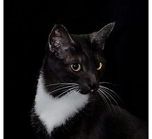 Smokey's whiskers Photographic Print