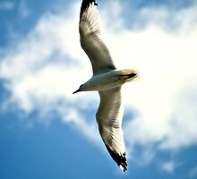 White Bird In Blue Sky by terrebo
