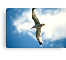 White Bird In Blue Sky Canvas Print