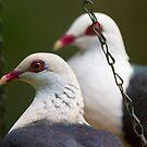 Pigeon Pair by byronbackyard