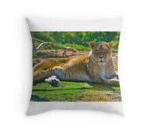 Lioness at Werribee Throw Pillow