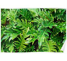 Tropical green leaves pattern Poster