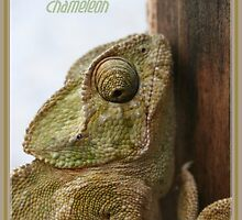 You're One In A Chameleon by taiche