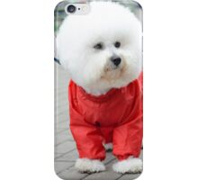 white Bichon Frise in a red raincoat  iPhone Case/Skin