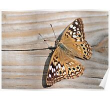 Butterfly On Deck Poster