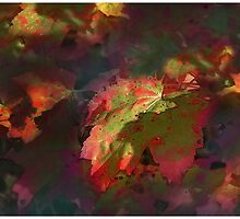 Red Maple Abstract by Wayne King