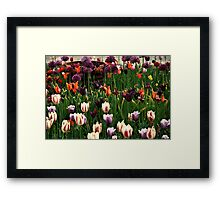 Field Of Colors Flowers Framed Print