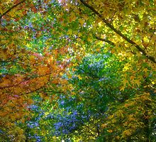Autumn Canopy - Mount Wilson NSW - The HDR Experience by Philip Johnson