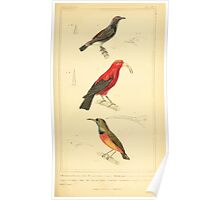 The Animal Kingdom by Georges Cuvier, PA Latreille, and Henry McMurtrie 1834 676 - Aves Avians Birds Poster