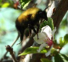 Honey Bee by tuffcookie