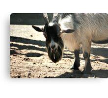 Smiling White And Black Goat Metal Print