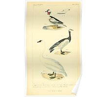 The Animal Kingdom by Georges Cuvier, PA Latreille, and Henry McMurtrie 1834 751 - Aves Avians Birds Poster