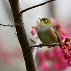 Winter Wax Eye by JaimeWalsh