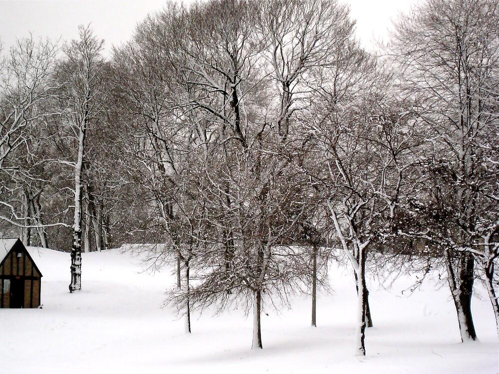 A Winter Scene by vizhen