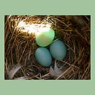 Bluebird Eggs by Heidi Hermes