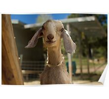 Say Goat Cheese Poster