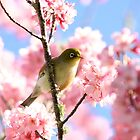 Wax Eye in Cherry Blossoms by JaimeWalsh