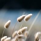 Bunny Tails by JaimeWalsh