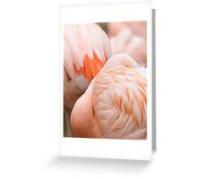 francisco flamingo Greeting Card