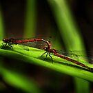Damsalflies by Katseyes