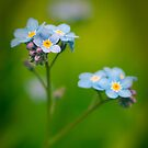 Cottage Garden Blue by humanremains