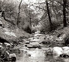 Southern Arizona Creek by jaedco