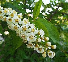 Tree Blossoms, spring flowers by artbykatsy