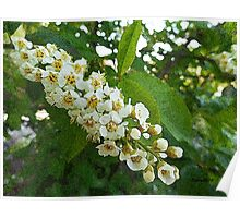 Tree Blossoms, spring flowers Poster