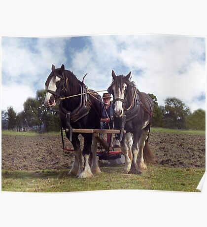 Horses at work in the field Poster