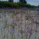 pretty little purple flowers by AlliMiller75