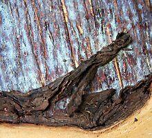 Wood and peel by Haydee  Yordan