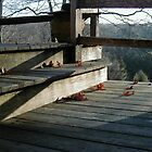 shadowed deck by DarylE