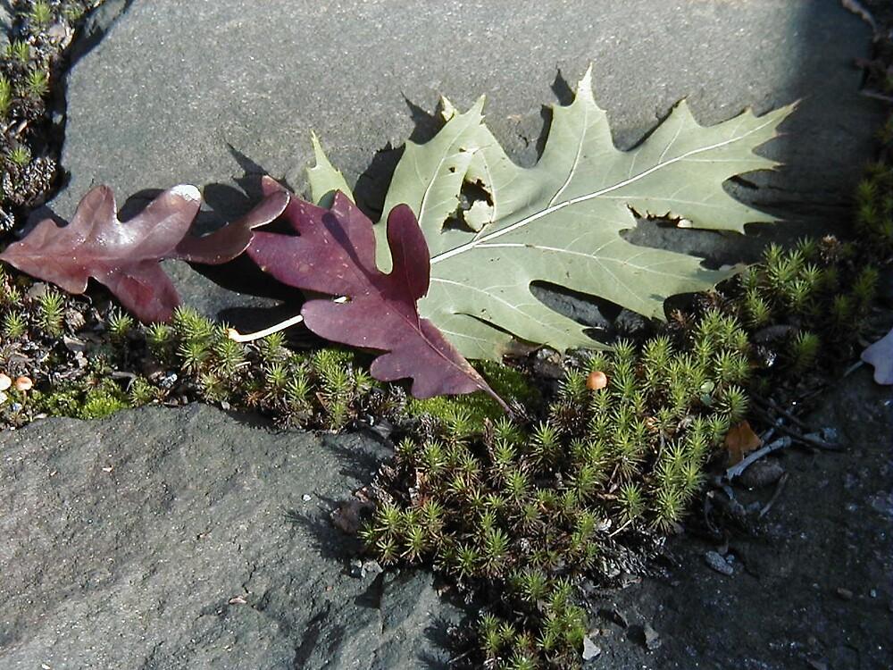 leaves macro by DarylE