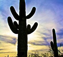 A Saguaro Cactus at Sunset by John Butler