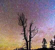 Colorful Celestial Night Portrait by Bo Insogna