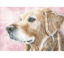 Faithful Companion - Labrador Photographic Print