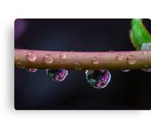 The rain Canvas Print
