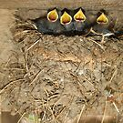 Barn Swallow Quartet by Karen Kaleta