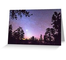 Forest Night Star Delight Greeting Card