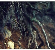 Roots by MsDunwich