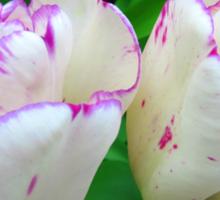 TulipTwins Sticker