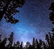 Forest Star Gazing An Astronomy Delight by Bo Insogna