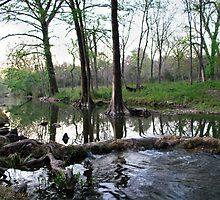 Cypress Creek by Cathy Jones