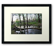 Cypress Creek Framed Print