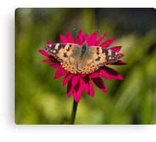 Painted lady butterfly -Vanessa cardui Canvas Print