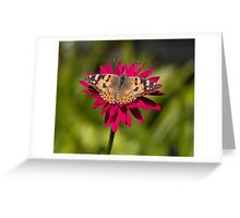 Painted lady butterfly -Vanessa cardui Greeting Card